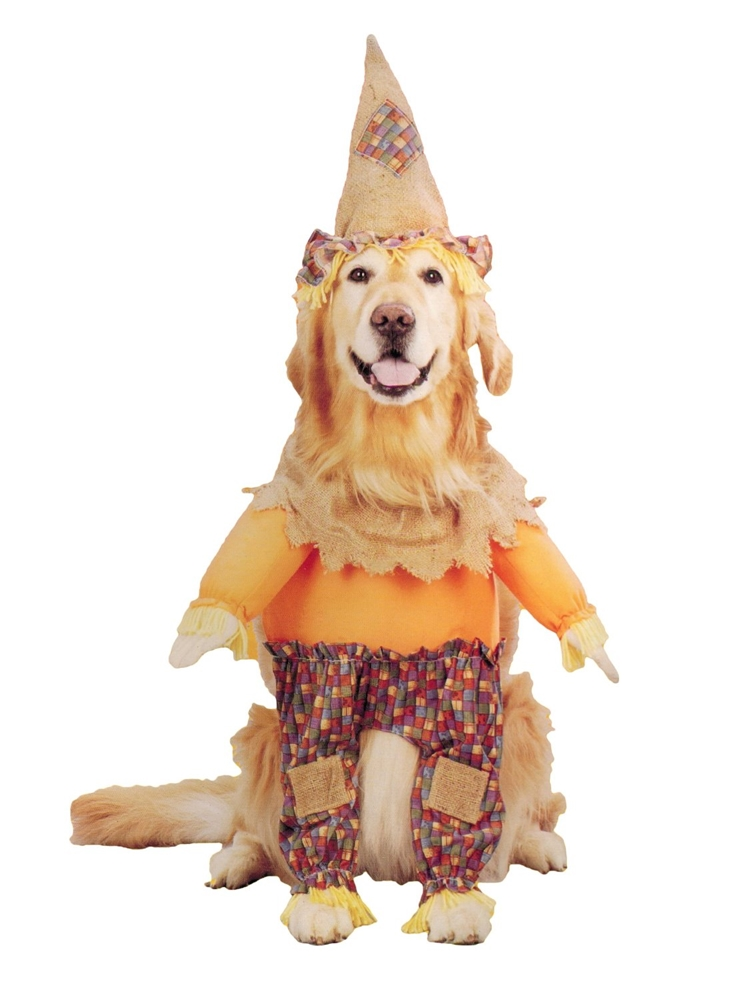 Lil' Scarecrow Dog Costume