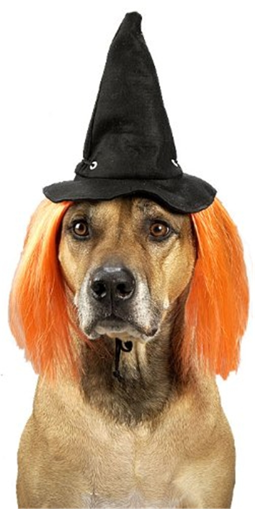 Wicked Witch Hat Pet Costume