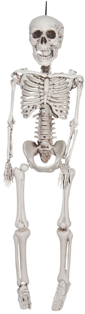 Realistic Plastic Skeleton 3ft by Sunstar Industries Inc.