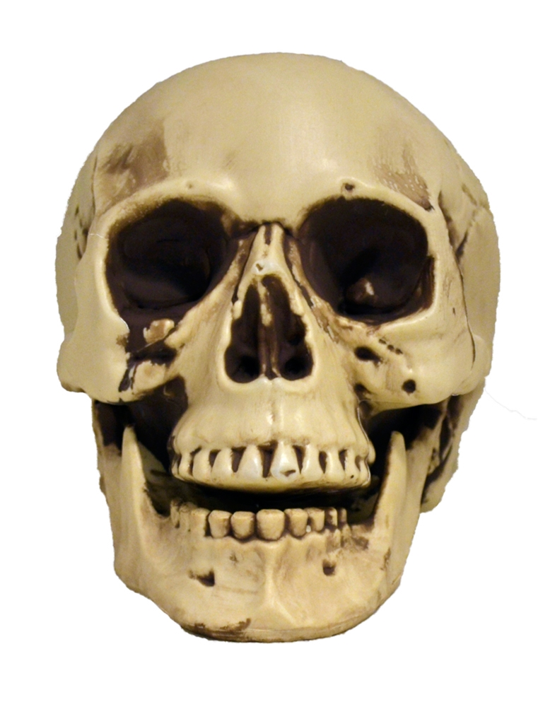 Realistic Skull with Movable Jaw