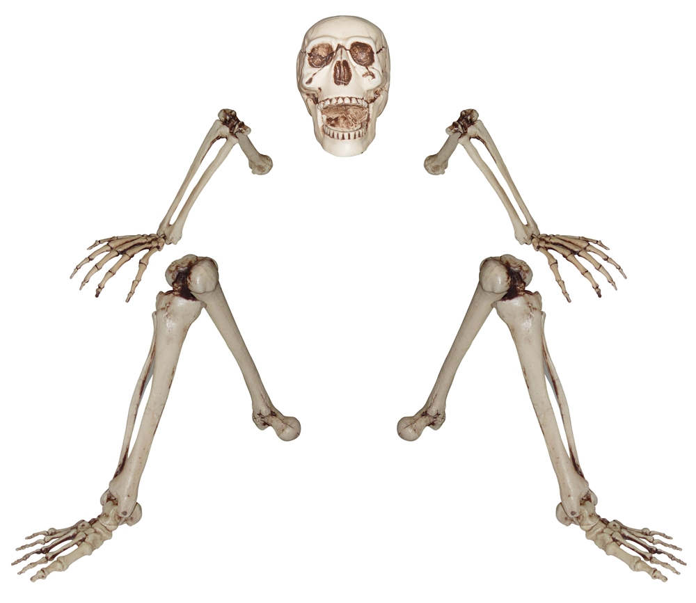 Lifesize Groundbreaker Skeleton
