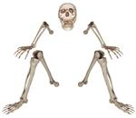 Lifesize-Groundbreaker-Skeleton