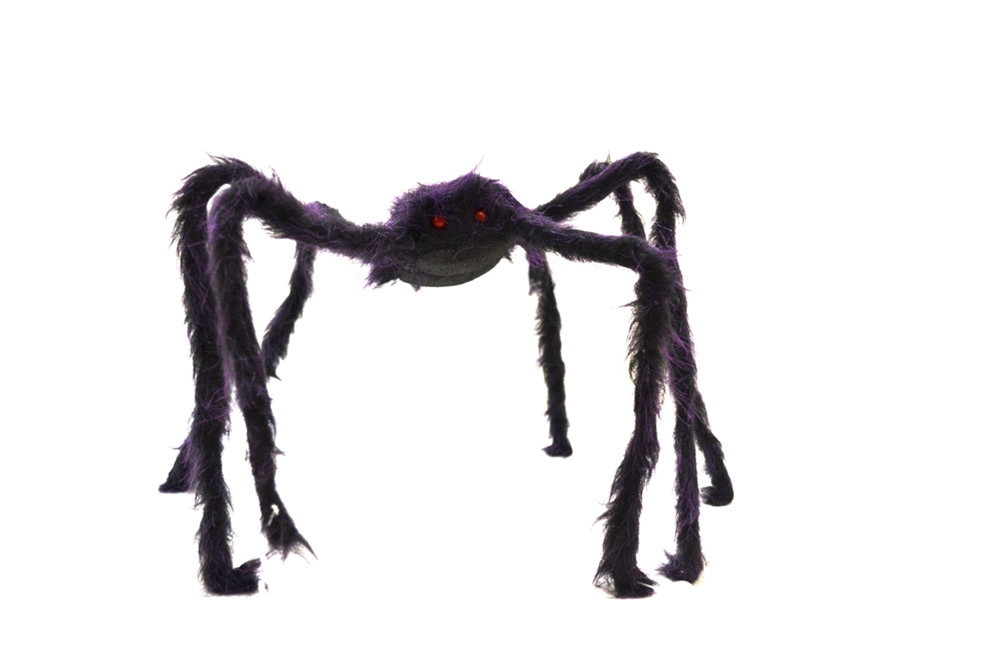 Image of Hairy Spider