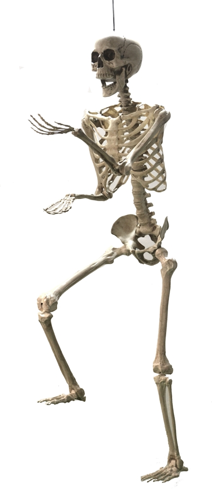 Life-Sized Posable Skeleton 5ft