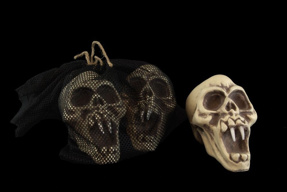 Skull with Fangs Set 3ct by Skeleton Store
