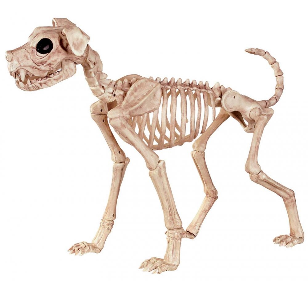 Buster the Dog Skeleton Prop