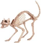 Kitty-Cat-Skeleton-Prop