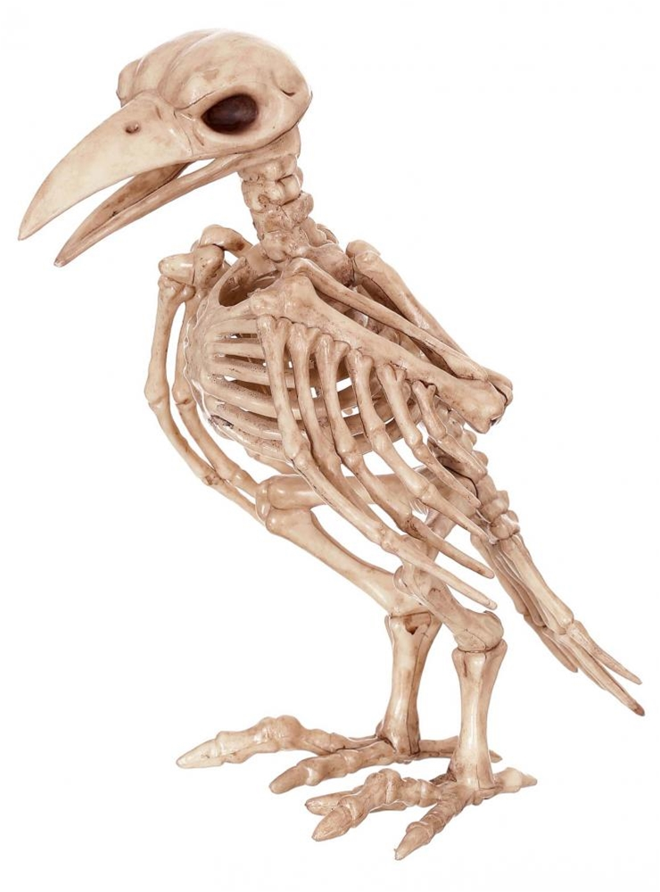 Eleanor the Raven Skeleton Prop