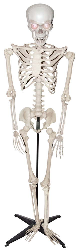 Standing & Talking Skeleton Prop