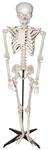 Standing-Talking-Skeleton-Prop