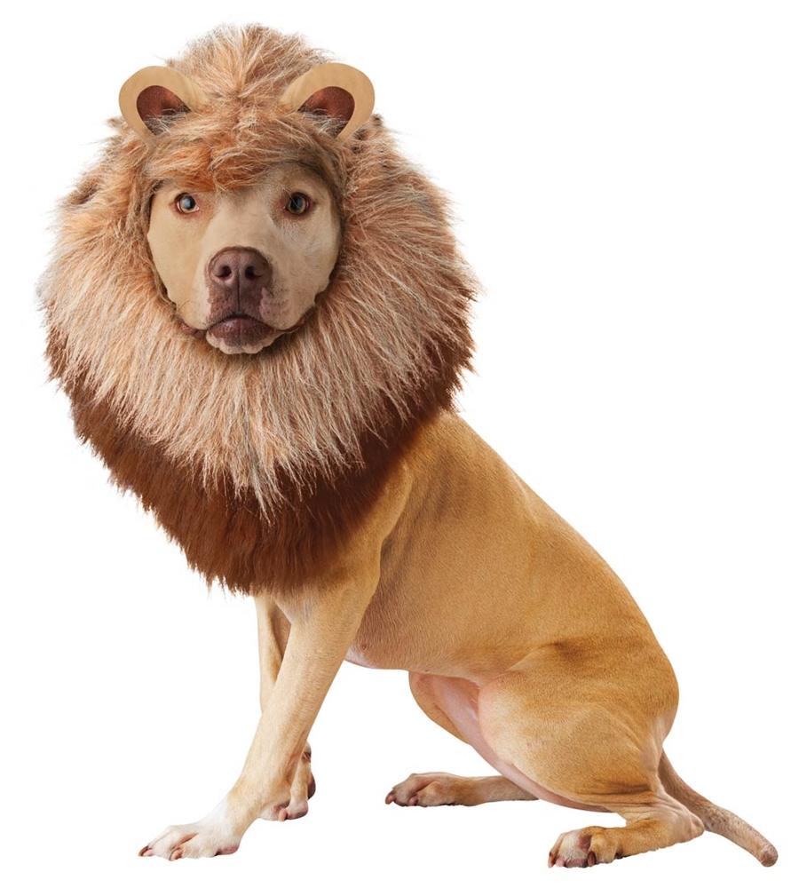 Roaring Lion Pet Costume