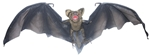 Black-Vampire-Bat