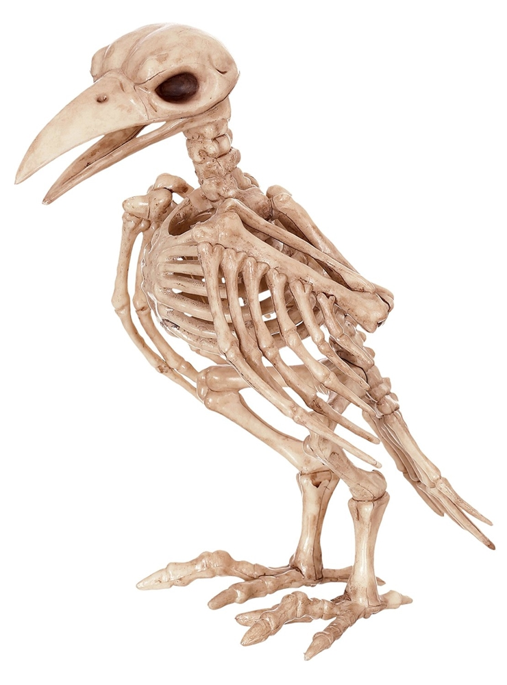 Skeleton Raven Prop