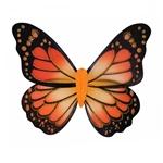 Monarch-Butterfly-Wings