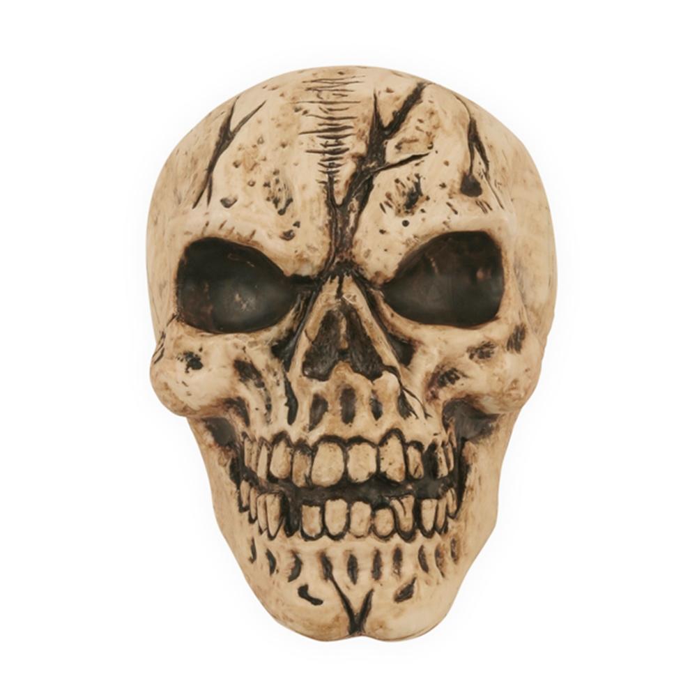 Life-Sized Skull Prop