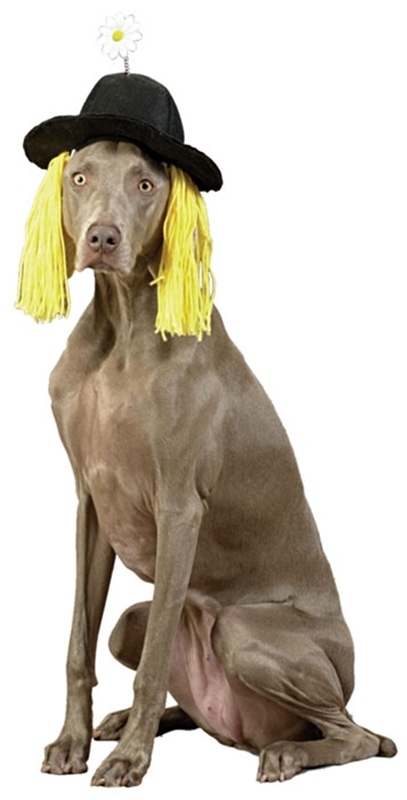 Image of Daisy Derby Hat with Hair Pet Costume