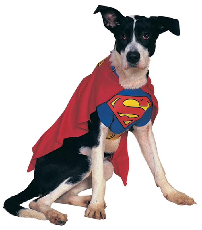 [Superman Dog Costume] (Costumes Superman)