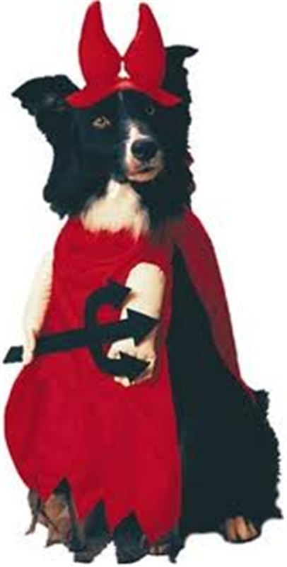 Devil In Disguise Pet Costume