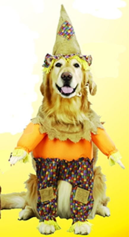 Lil Scarecrow Dog Costume