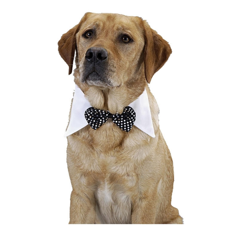 Black Bow Tie Pet Costume