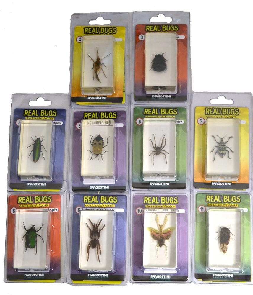 DeAgostini Encased Real Bug (More Types)