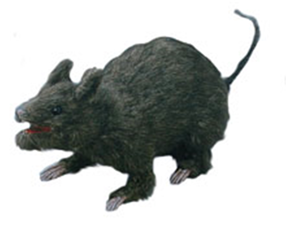 Realistic Attacking Rat
