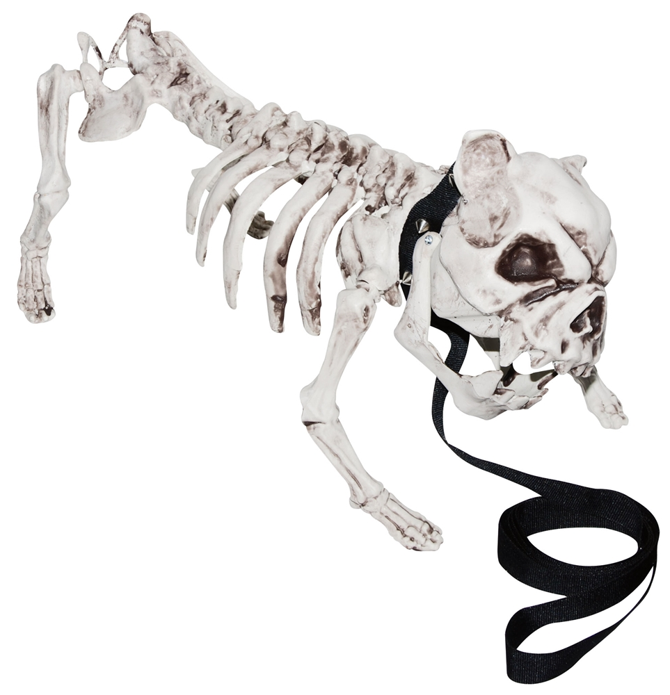 English Bulldog Skeleton Prop