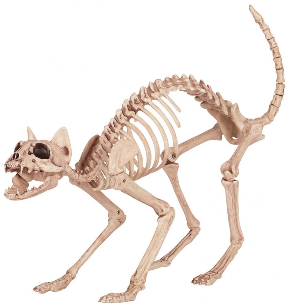 Kitty Cat Skeleton Prop