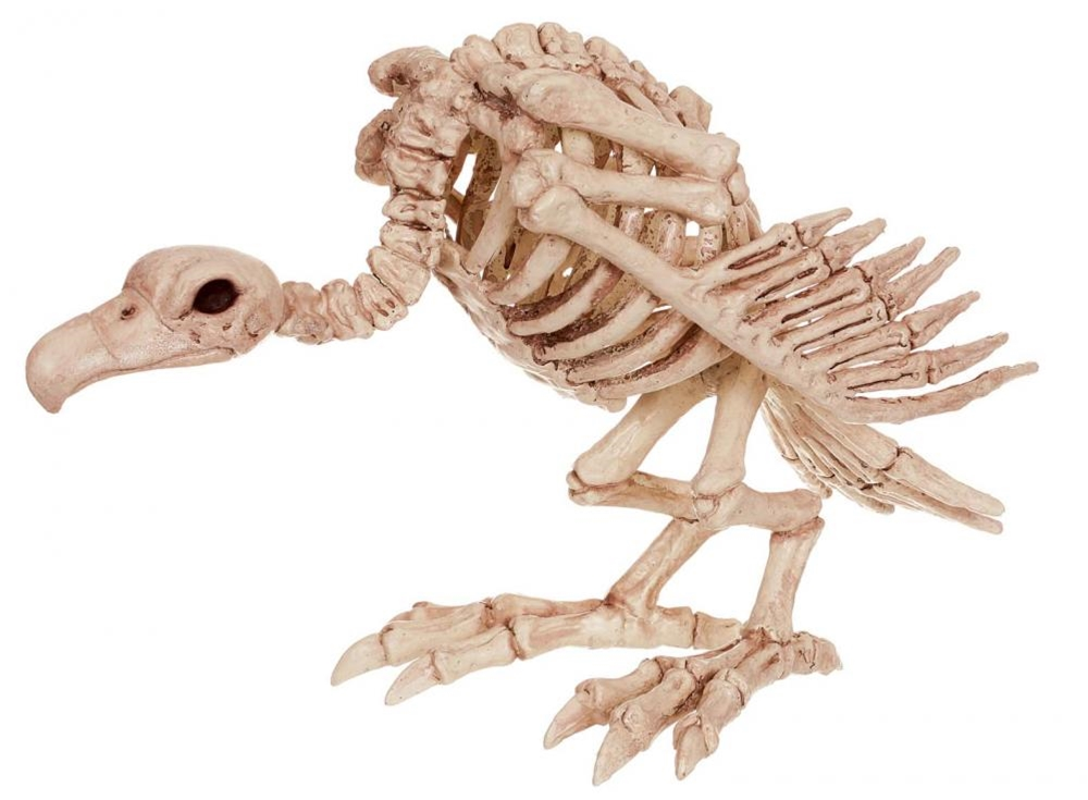 Vulture Skeleton Prop