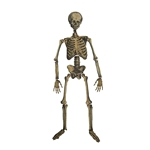 Flat-Hanging-Skeleton-5ft