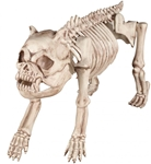 Bones-the-Bulldog-Skeleton-Prop