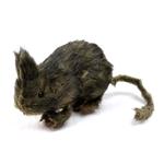 Styrofoam-Rat