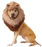 Roaring-Lion-Pet-Costume