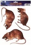 3D-Rat-Window-Stickers