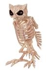 Owl-Skeleton-Prop-135in