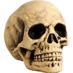 Big-Skull-Styrofoam-Head