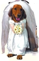 Bride-Dog-Costume