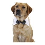 Black-Bow-Tie-Pet-Costume