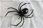 Black-Widow-Spider-6in